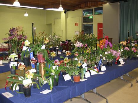 More display plants
