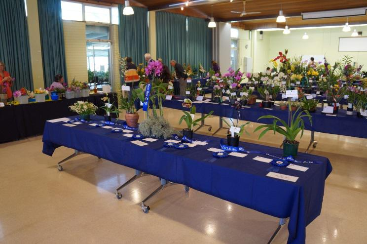 General display at John Oxley District Orchid Society Annual Show
