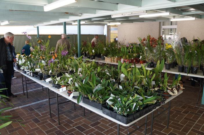 Plants for sale at John Oxley District Orchid Society Annual Show