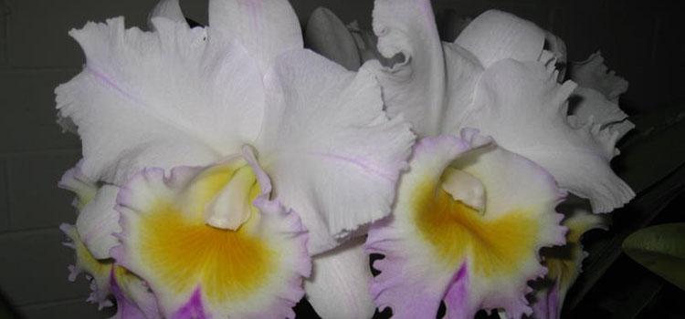 John Oxley District Orchid Society
