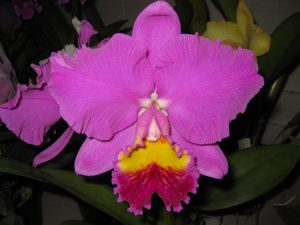 Rlc. Dream Trader ' Casino '